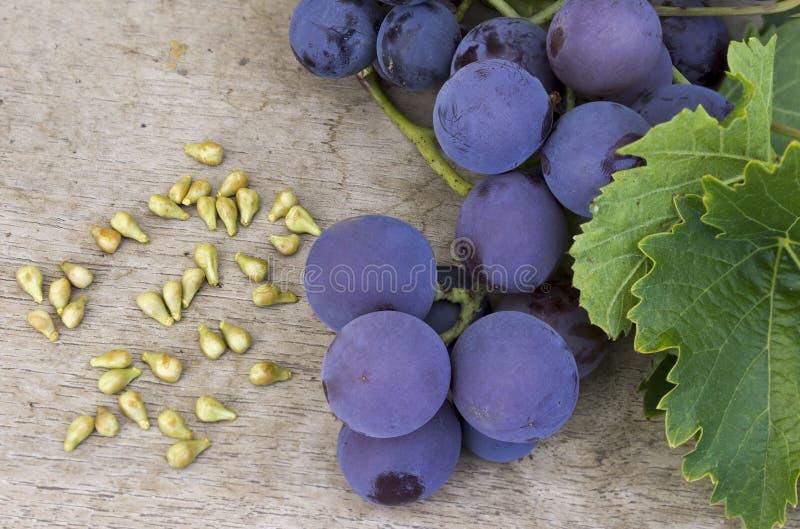 Winogrona ziarno zdjęcie royalty free