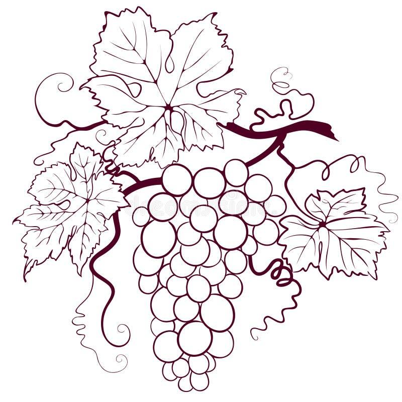 winogrono liść