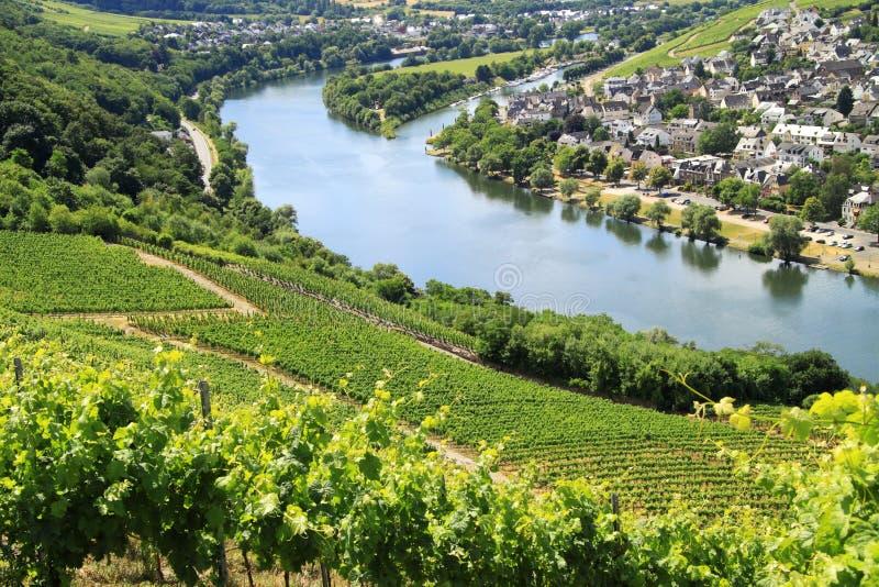 Winogrono plantacja dla Mosel wina obraz royalty free
