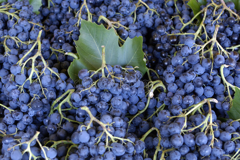 winogrono rynek fotografia stock