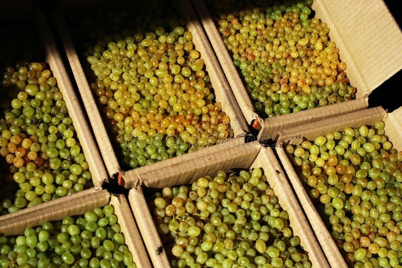 winogrono smakowity obrazy royalty free