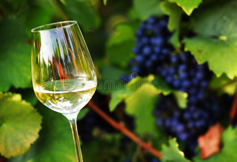Winogrono & wino obraz stock