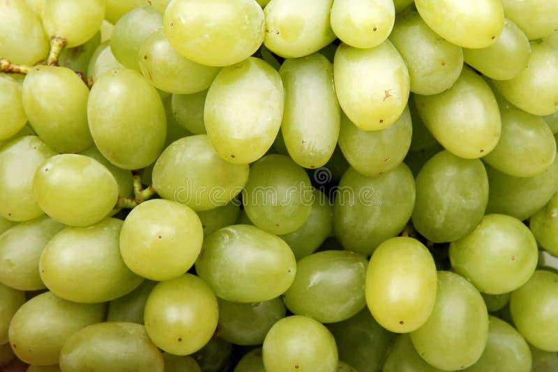 winogrono zieleń obrazy royalty free