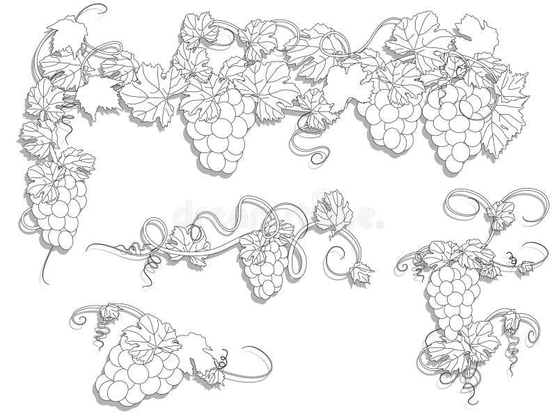 winorośl ilustracji
