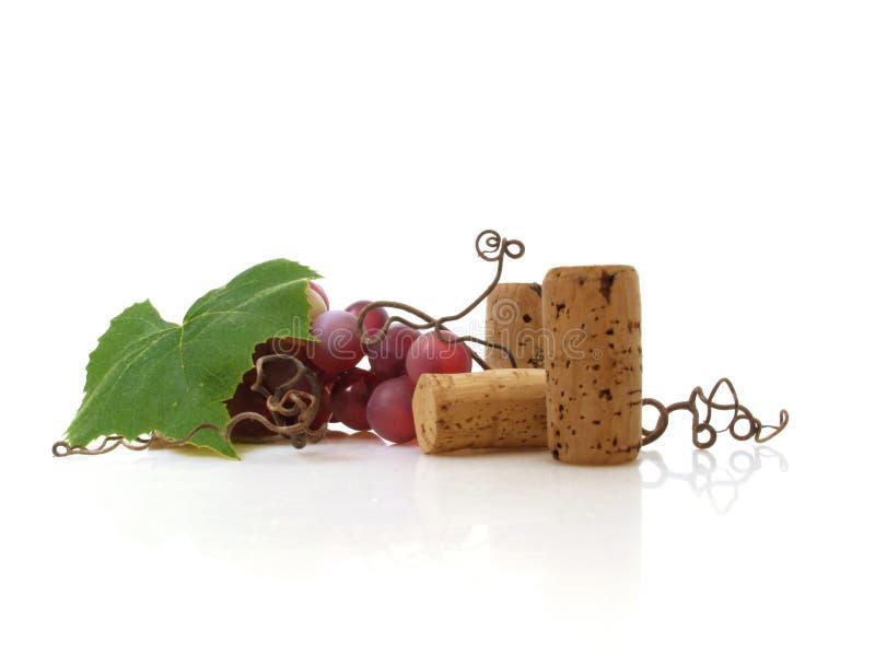 winorośl zdjęcie stock