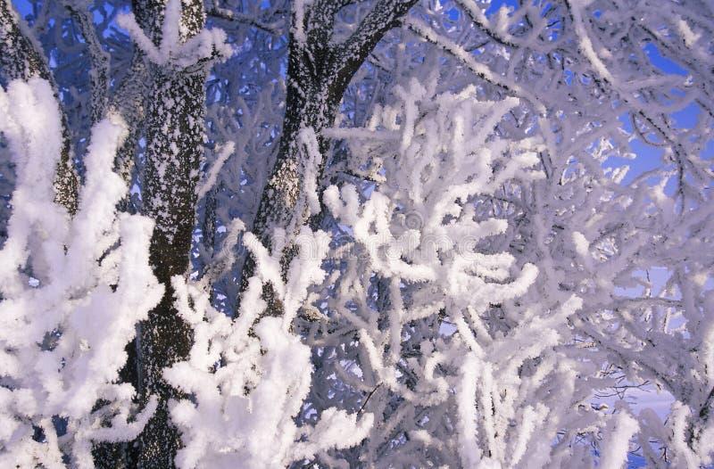 Winter 002 stock photography