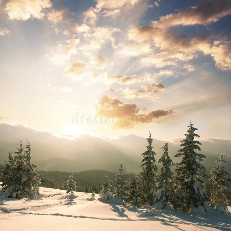 Download Winter stock photo. Image of carpathian, orange, wind - 11375078