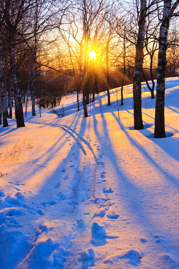 Free Winter Stock Image - 11409591