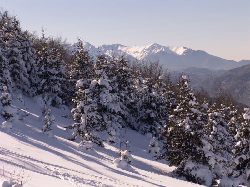Winter lizenzfreie stockbilder