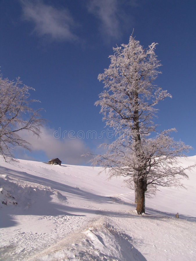 Download Winter stock photo. Image of birch, free, gradient, hills - 117132