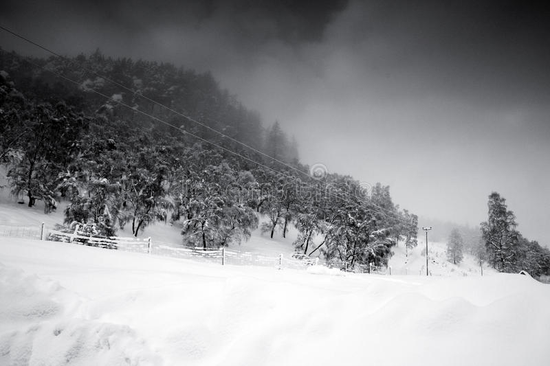 Download Winter stock photo. Image of winter, snow, wintry, pine - 12469806