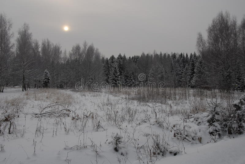 Winter. Forest near small town royalty free stock images