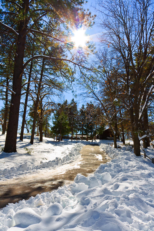 Download Winter stock image. Image of light, trail, cool, rays - 14862157