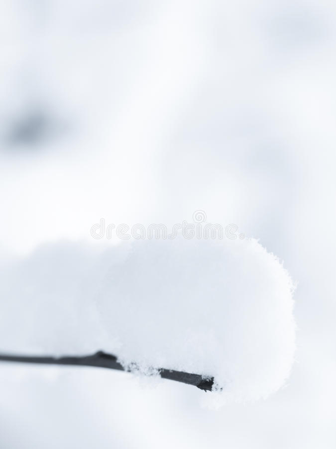 Download Winter stock image. Image of shrub, floral, season, frost - 22492237