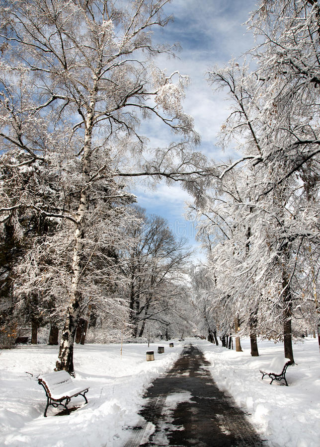 Download Winter stock image. Image of branch, hard, snowflakes - 22962873