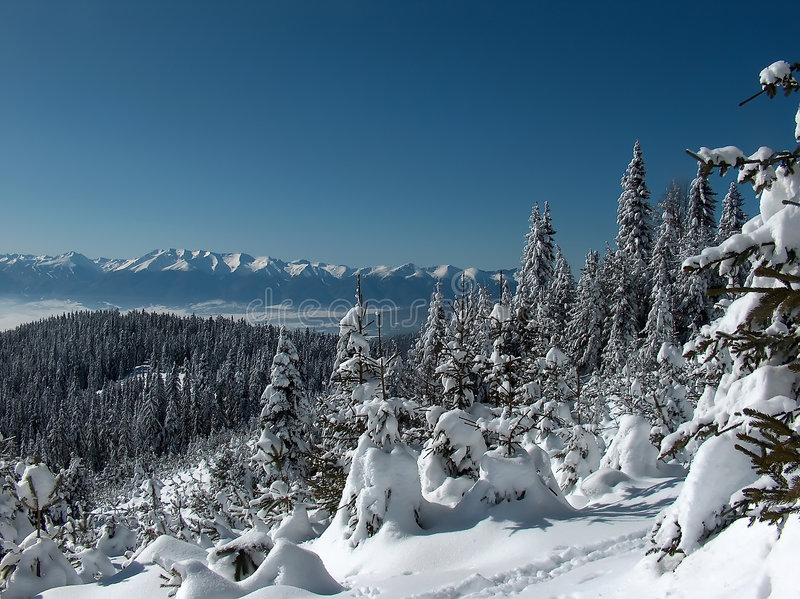 Download Winter Stock Photography - Image: 2301092