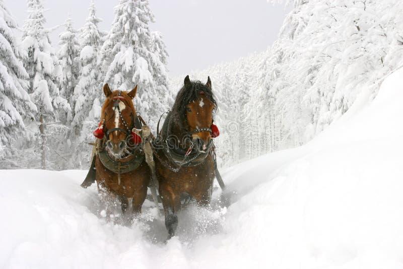 Winter. Sleight ride, Poland, Europe