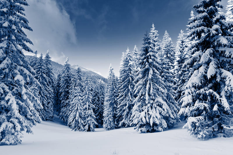 Download Winter stock photo. Image of christmas, frozen, frost - 25151384