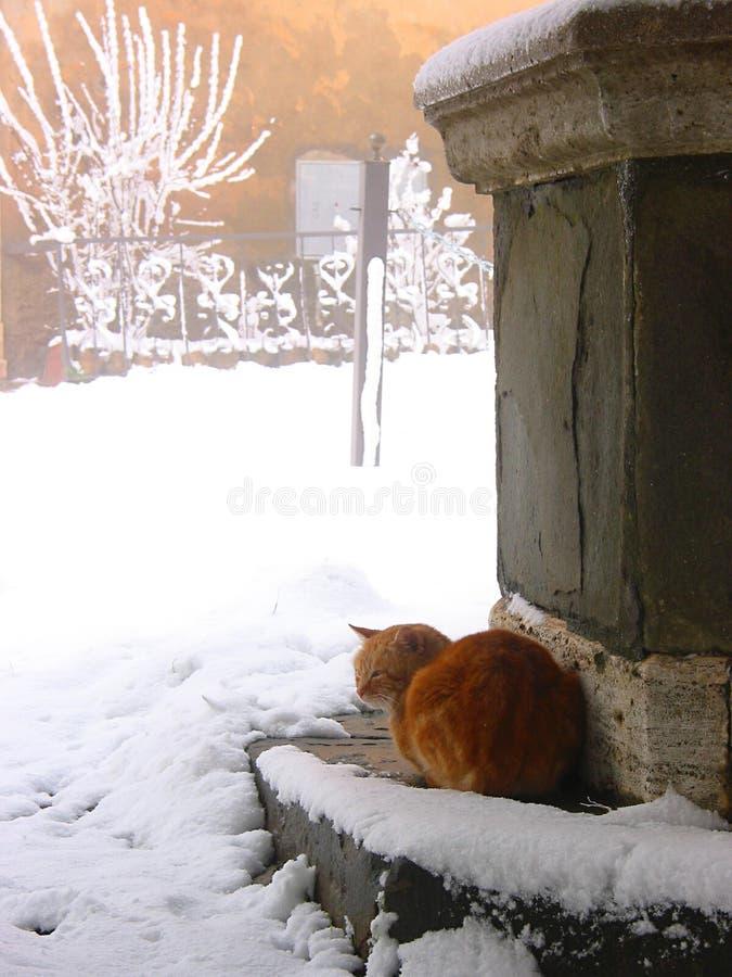 Download Winter stockfoto. Bild von statue, katze, winter, schnee - 34876