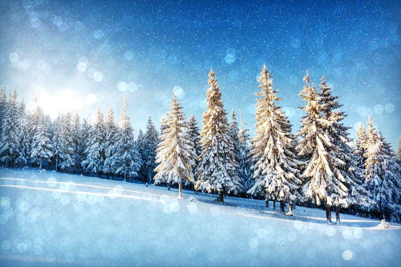 Winter lizenzfreies stockbild