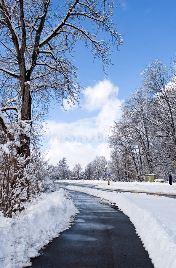 Download Winter stock image. Image of blue, forest, blustery, merced - 604225