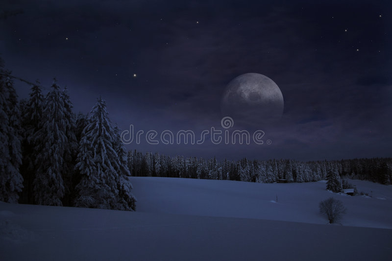Download Winter stock photo. Image of scenic, firs, idyll, blanket - 7456554