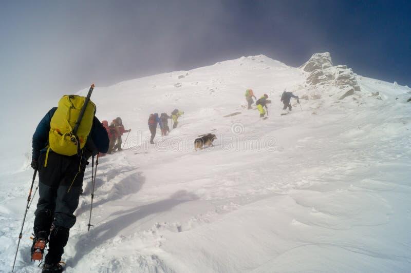 Winter adventures. To the summit. Carpathians. Ukraine. stock image