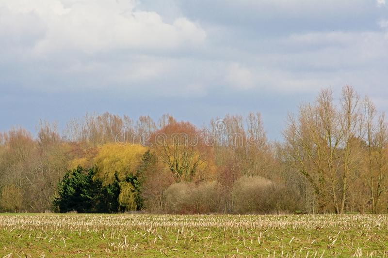 Winter agrarian field with colorful trees behind royalty free stock photo