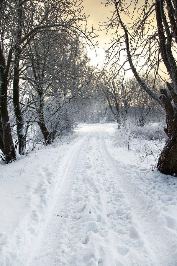 Winter alley