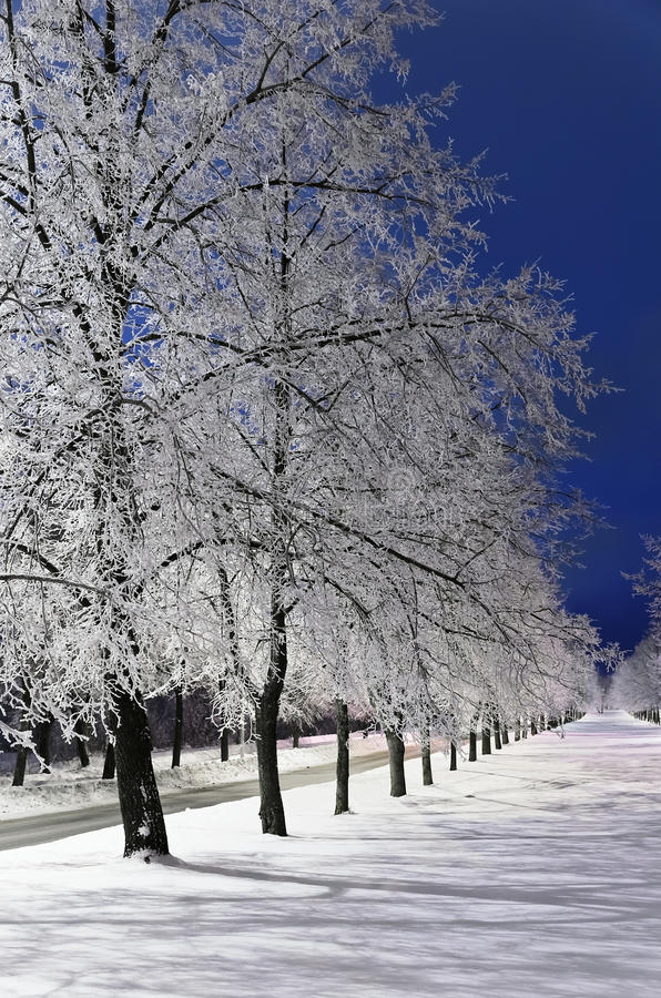 Winter Alley Royalty Free Stock Images