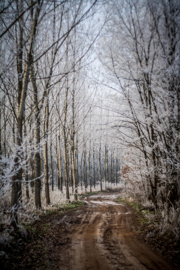 Download Winter Forest Trail stock image. Image of seasonal, beautiful - 29787627