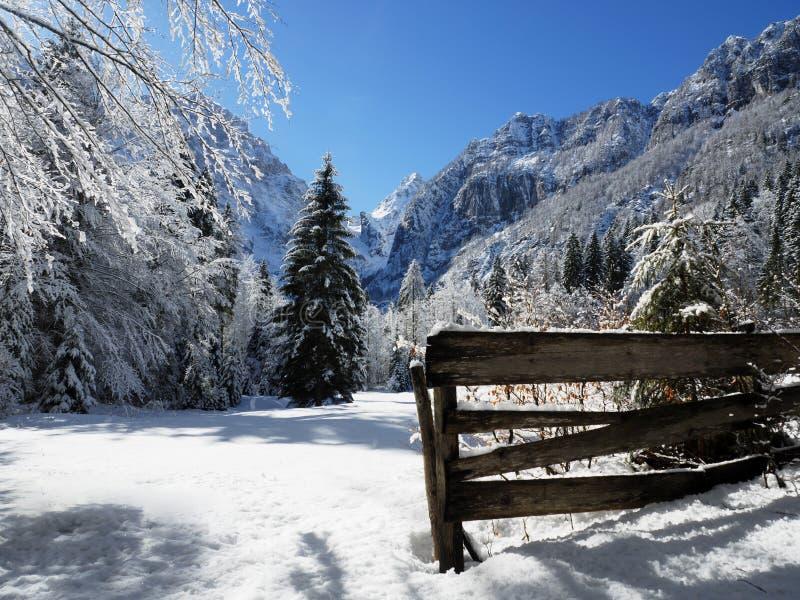 Winter-Alpenwiese in den Slowenischen Alpen lizenzfreies stockbild