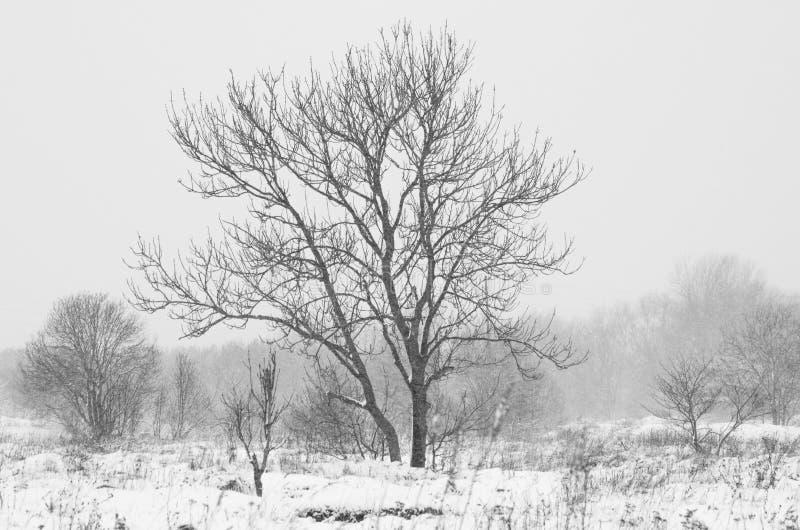 Winter in Amsterdam lizenzfreie stockfotos