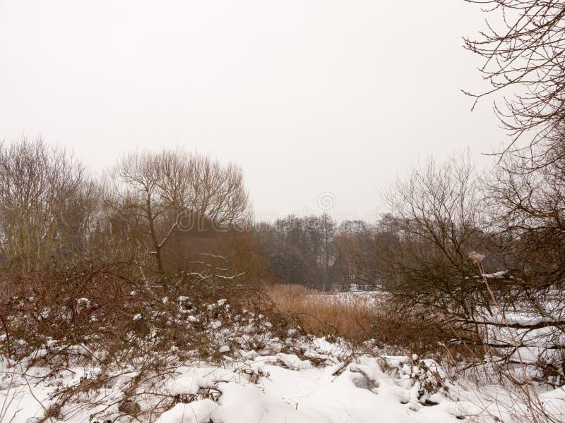 Winter außerhalb der hölzerner Himmelbäume des Schnees der Szene See gefrorenen weißen bloß lizenzfreies stockfoto