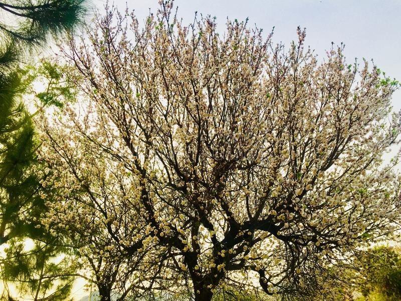 Winter and autumn season's trees beauty royalty free stock photography