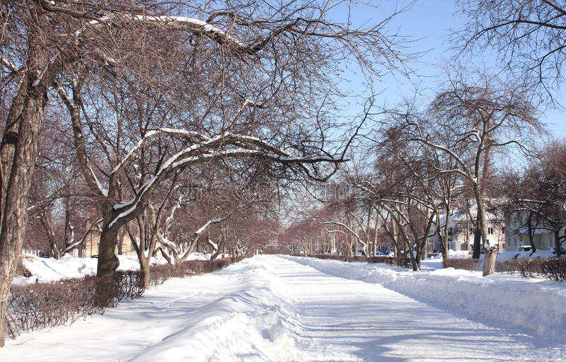 Winter avenue. In city park royalty free stock image