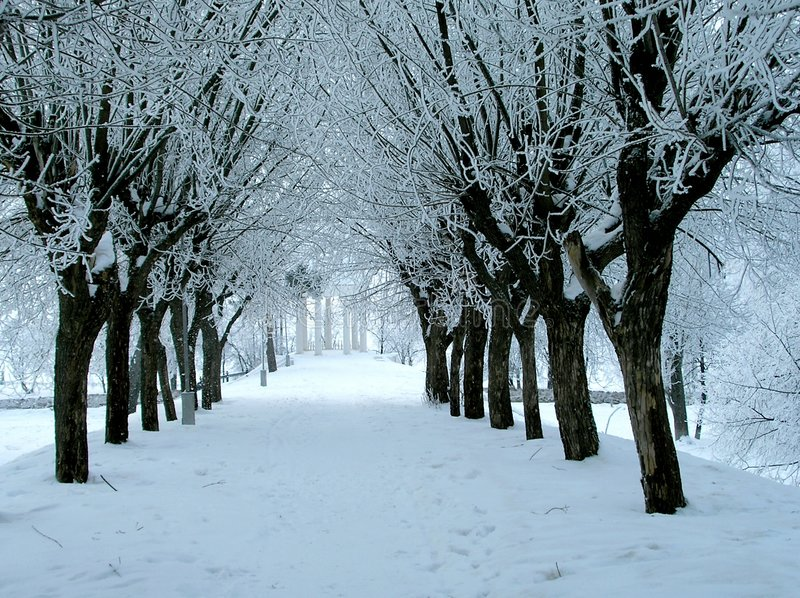 Winter avenue. Avenue in winter park royalty free stock photography
