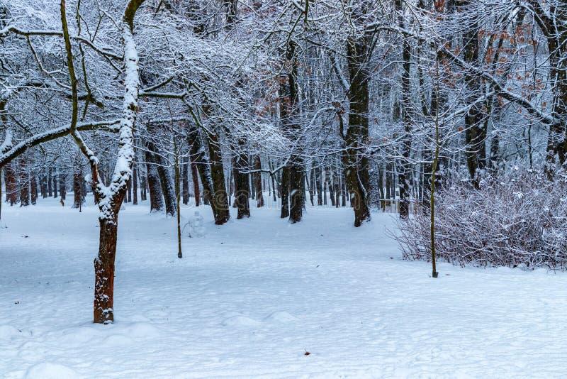 Winter in the Aviator Polish Park in Krakow, Poland stock photo