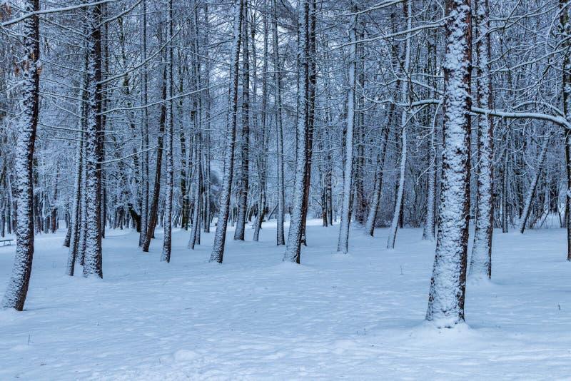 Winter in the Polish Aviators Park, Krakow, Poland stock images
