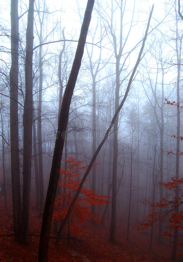 Winter-Bäume stockfoto