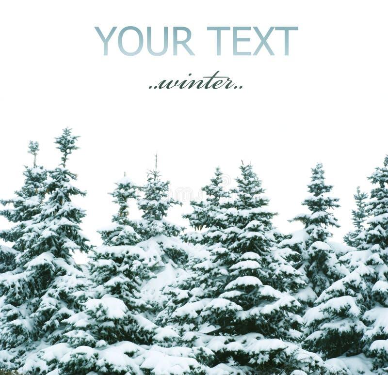 Winter-Bäume Stockfotos