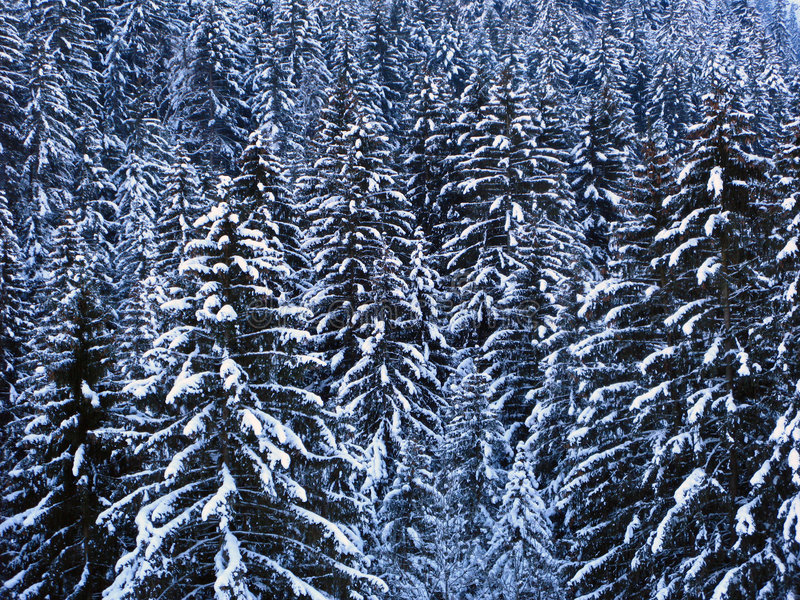 Winter background 01