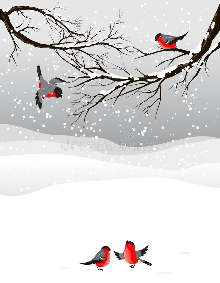 Winter background with birds bullfinch. With space for text royalty free illustration