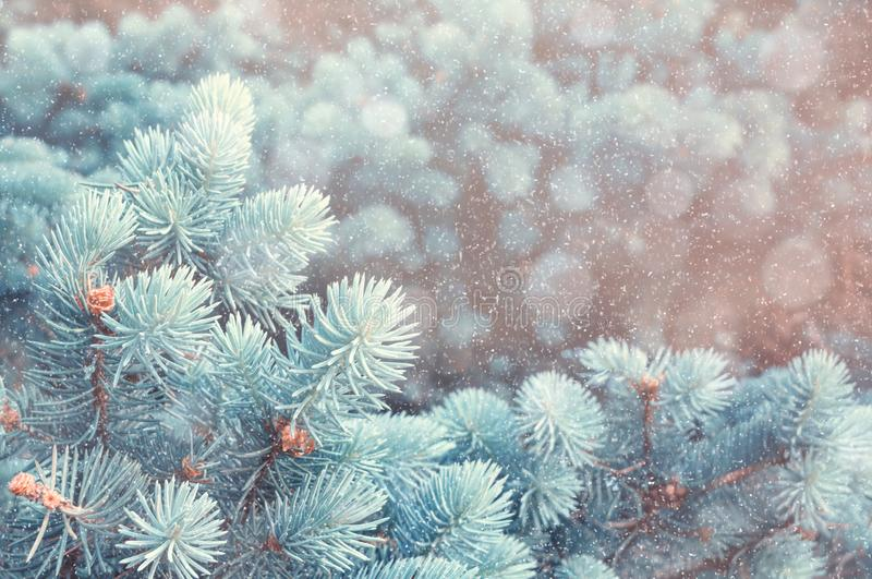 Winter background. Blue pine tree branches under winter snowfall, closeup of winter nature in retro tones stock images