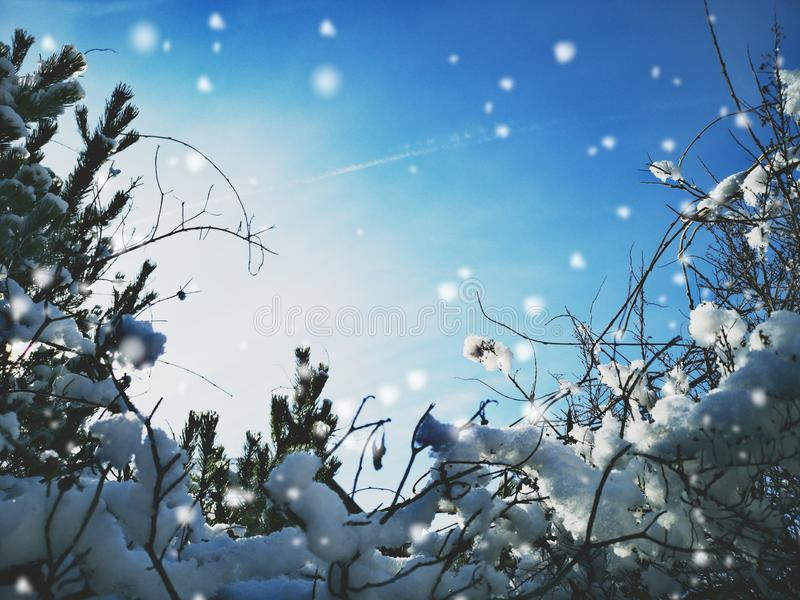 Winter background or frame stock image