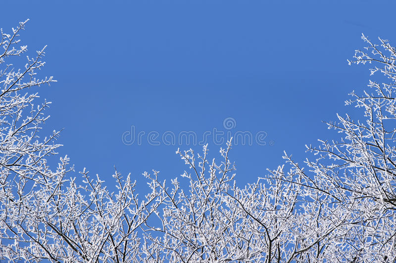 Winter background with a frame of snow covered bare branches against the blue sky, concept for christmas or new year stock image
