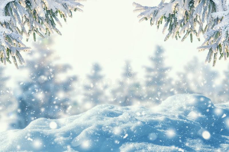 Winter background of frost fir branch and snowfall. stock photos