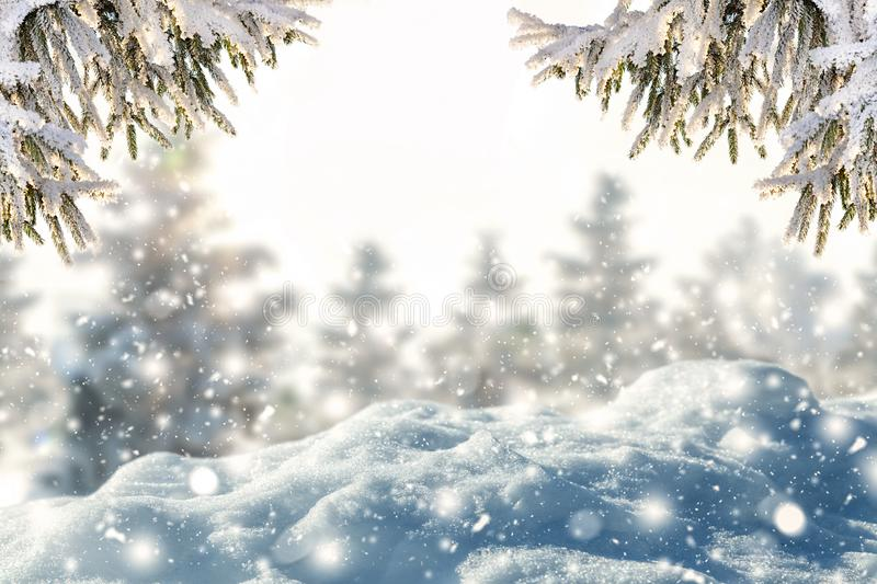Winter background of frost fir branch and snowfall. stock image
