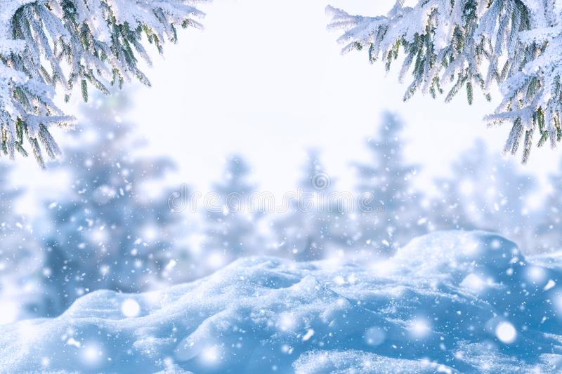 Winter background of frost fir branch and snowfall. New year background. royalty free stock photo