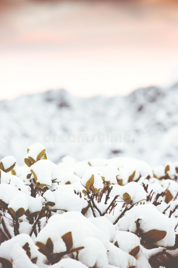 Winter Background with snow branches and mountains royalty free stock photography